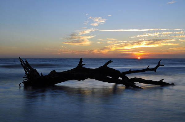 Photograph - Sunrise At Driftwood Beach 7.2 by Bruce Gourley