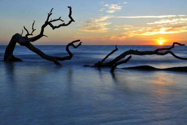 Photograph - Sunrise At Driftwood Beach 7.3 by Bruce Gourley