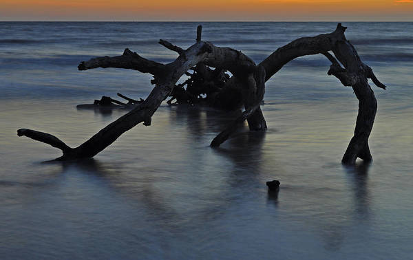 Photograph - Sunrise At Driftwood Beach 7.7 by Bruce Gourley