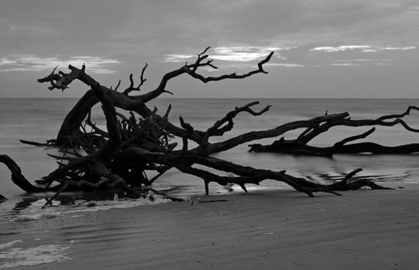 Photograph - Sunrise At Driftwood Beach Bw by Bruce Gourley