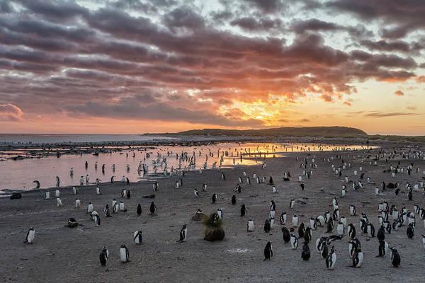 Sunrise Beach Photograph - Sunrise At Sea Lion by Joan Gil Raga