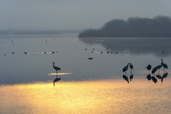 Photograph - Sunrise Over The Hula Valley Israel 1 by Dubi Roman
