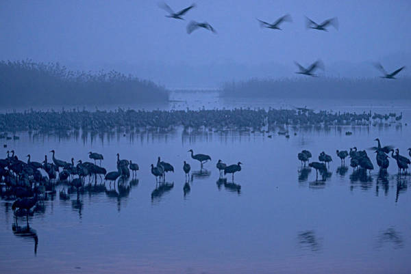 Photograph - Sunrise Over The Hula Valley Israel 4 by Dubi Roman