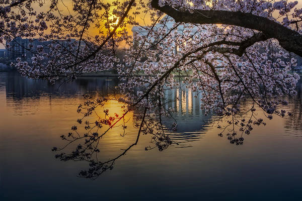 Photograph - Sunrise At The Thomas Jefferson Memorial by Susan Candelario