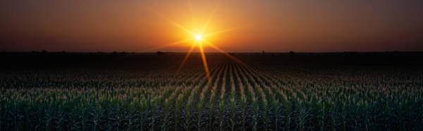 Color Burst Wall Art - Photograph - Sunrise, Crops, Farm, Sacramento by Panoramic Images