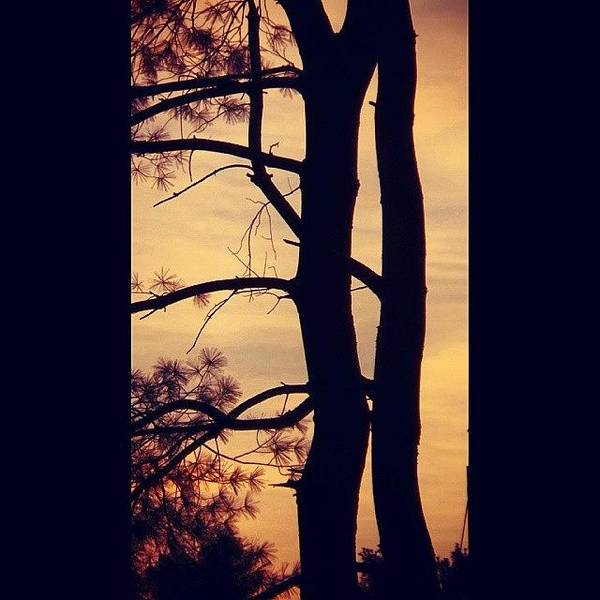 Acrylic Wall Art - Photograph - Sunrise Silhouette by Charlie Cliques