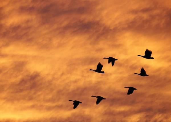 Photograph - Sunrise Flight 2 by Diane Alexander