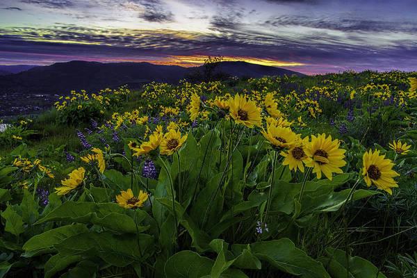 Balsamorhiza Sagittata Photograph - Sunrise From Rowena Overlook by Myer Bornstein