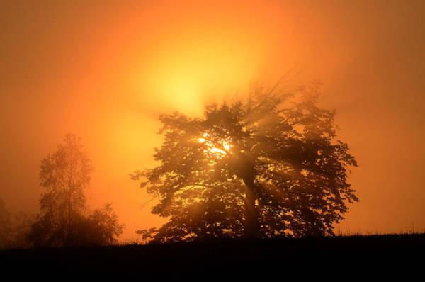 Sunrise In Fog Art Print