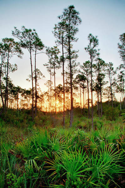 Everglades National Park Photograph - Sunrise In Long Pine Area Of Everglades by Terry Eggers