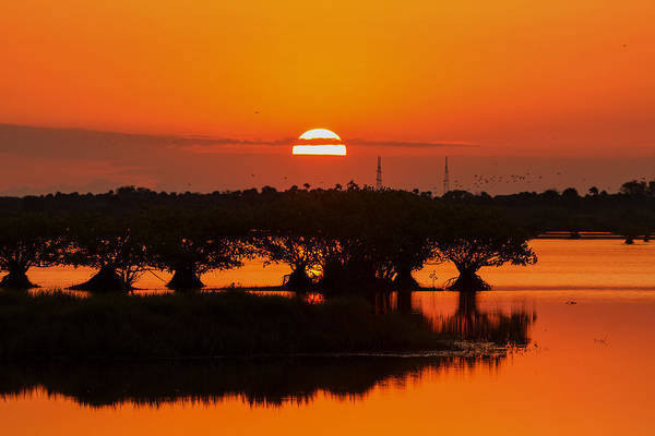 Photograph - Sunrise In The Mangroves by Dorothy Cunningham