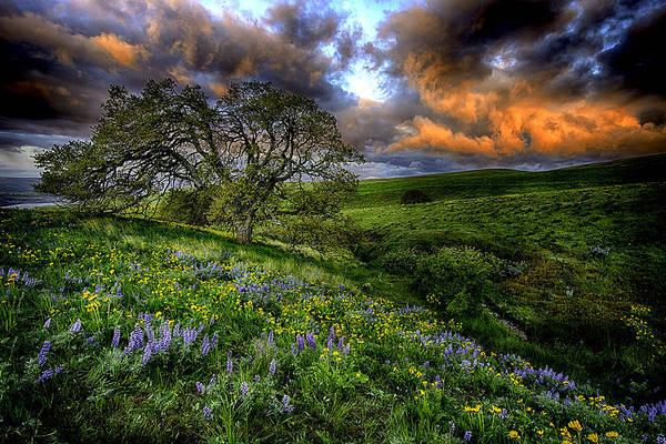 Balsamorhiza Sagittata Photograph - Sunrise On Dalles Mountain by Myer Bornstein