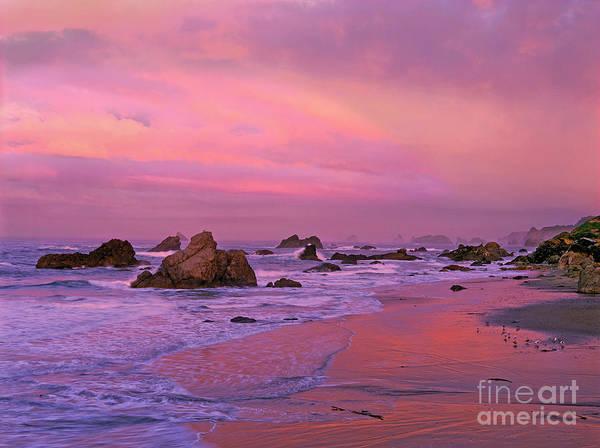 Photograph - Sunrise On Sea Stacks Harris Sb Oregon by Dave Welling