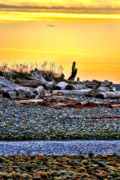 Photograph - Sunrise On The Beach by Peggy Collins