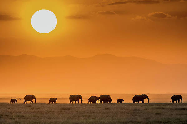 Herd Photograph - Sunrise Over Amboseli by Jeffrey C. Sink