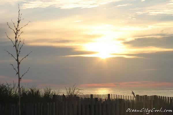 Photograph - Sunrise Over Beach Dune by Robert Banach