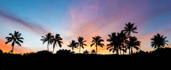 Photograph - Sunrise Palm Trees From Secret Beach by Pierre Leclerc Photography