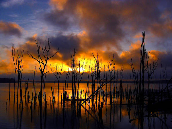 Photograph - Sunrise by Raymond Salani III