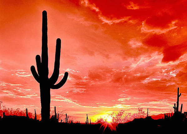Wall Art - Photograph - Sunrise Saguaro National Park by Bob and Nadine Johnston
