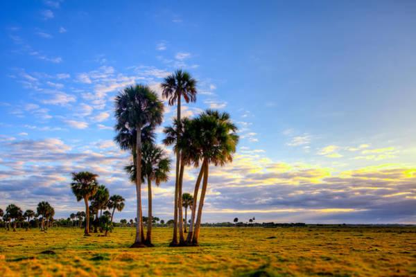 Palmetto Photograph - Sunrise Sentinels by W Chris Fooshee