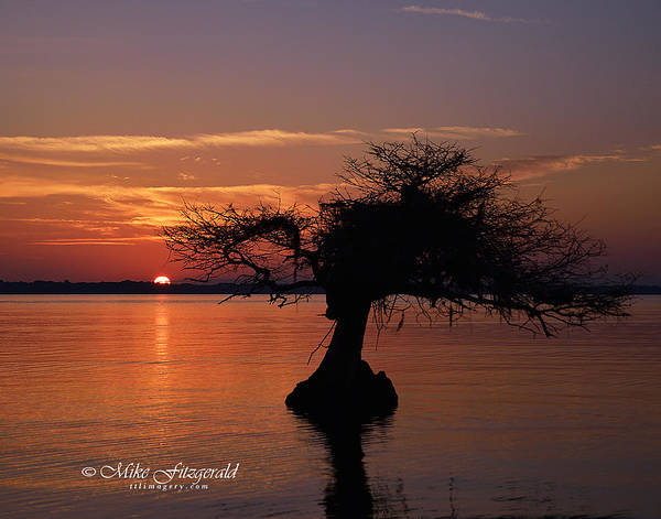 Photograph - Sunrise Silhouette by Mike Fitzgerald