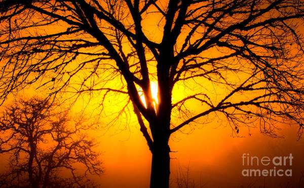 Photograph - Sunrise Through Fog by Michael Cross