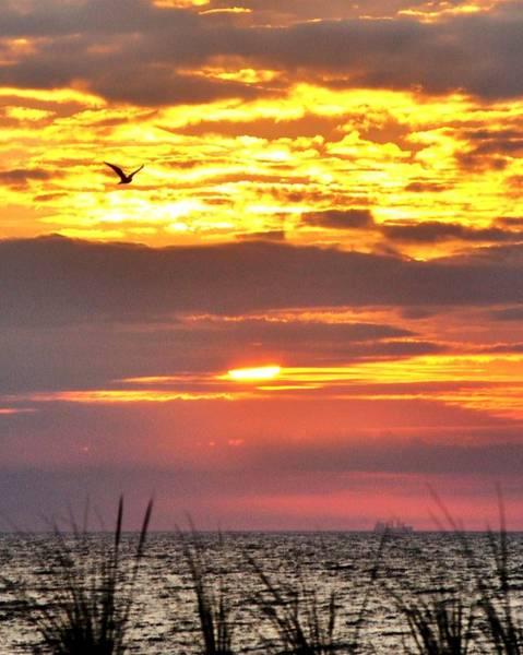 Photograph - Sunrise Through The Grass by Kim Bemis