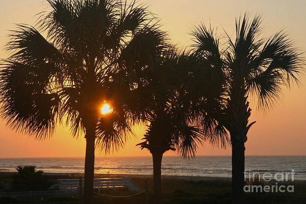 Photograph - Sunrise Through The Palms by Kevin McCarthy