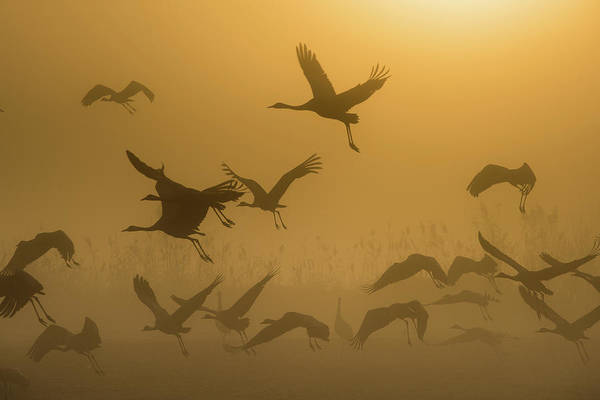 Early Morning Photograph - Sunrise With Cranes by Ronen Rosenblatt