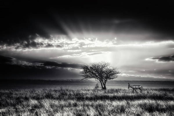 Wild Grass Photograph - Sunrise With Hartebeest by Piet Flour