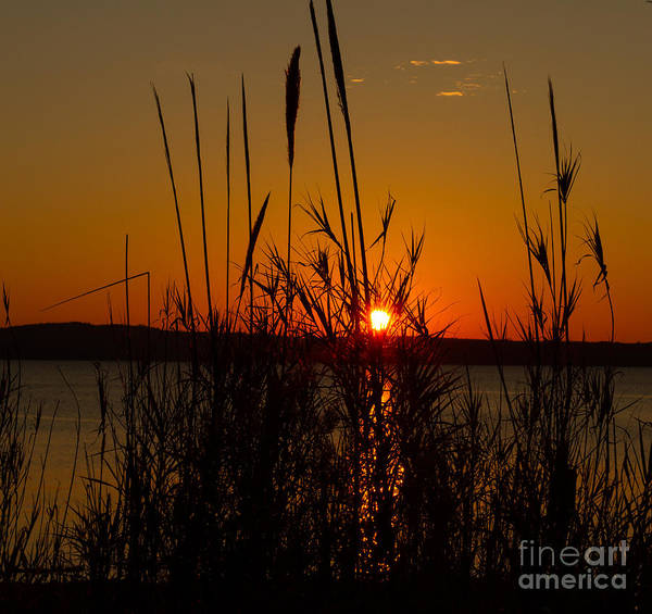 Photograph - Sunset - 1 by Heather Roper