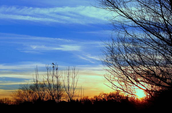 Photograph - Sunset And 3 Birds by Rima Biswas