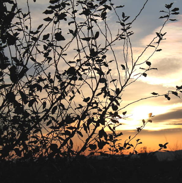 Photograph - Sunset And Nature's Silhouette by Candice Trimble
