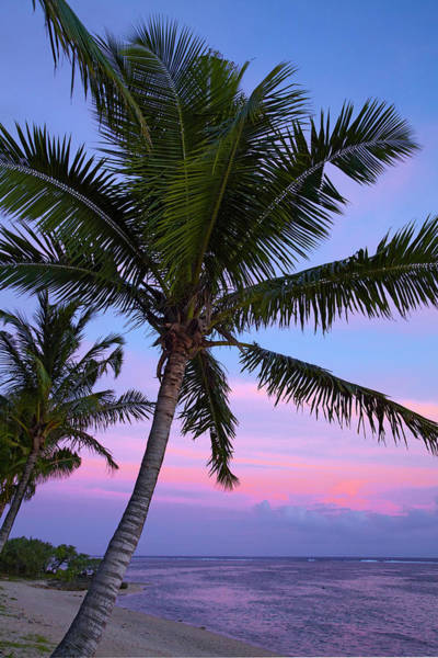 Foreshore Photograph - Sunset And Palm Tree, Coral Coast, Viti by David Wall
