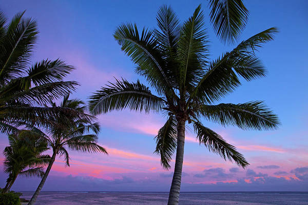 Foreshore Photograph - Sunset And Palm Trees, Coral Coast by David Wall
