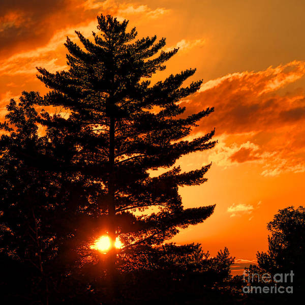 Photograph - Sunset And Pine Tree  by Olivier Le Queinec