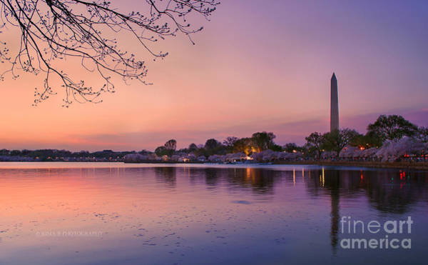 Photograph - Sunset At Cherry Blossom Festival by Rima Biswas