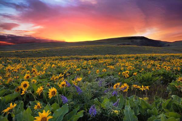 Balsamorhiza Sagittata Photograph - Sunset At Columbia Hills State Park by David Gn