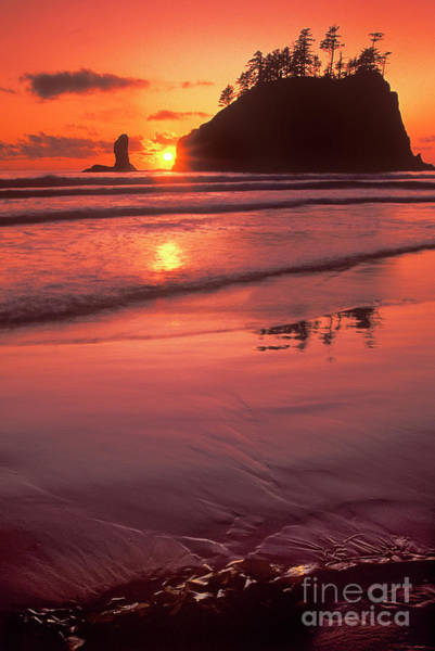 Photograph - Sunset At Second Beach Olympic National Park by Dave Welling