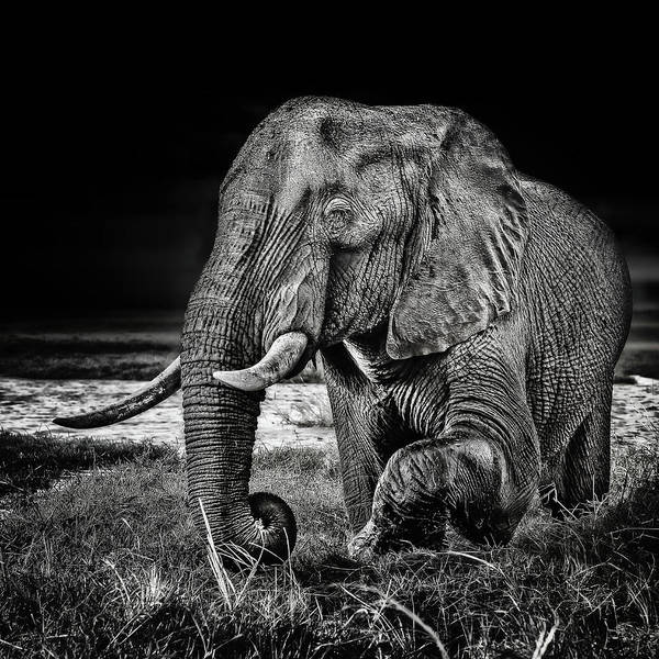 Tooth Photograph - Sunset At The Waterhole by Piet Flour
