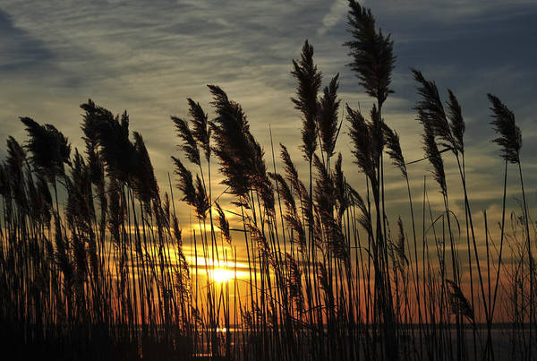 Photograph - Sunset Bay Seaside New Jersey by Terry DeLuco