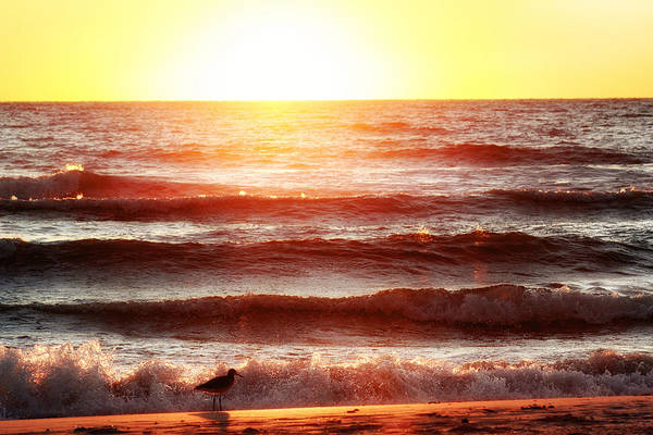 Photograph - Sunset Beach by Daniel George