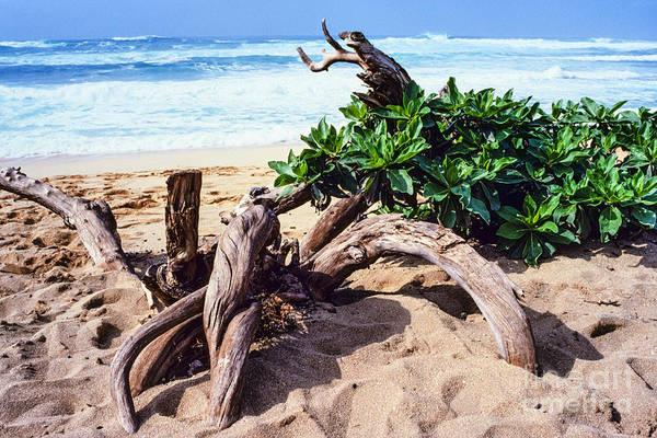 Photograph - Sunset Beach Driftwood by Thomas R Fletcher