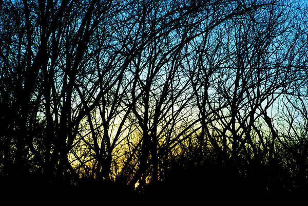 Photograph - Sunset Behind Trees by Larah McElroy