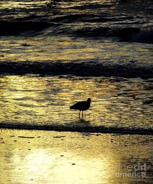 Photograph - Sunset Bird by D Hackett
