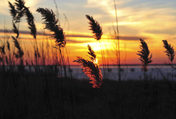 Photograph - Sunset Breeze by Terry DeLuco