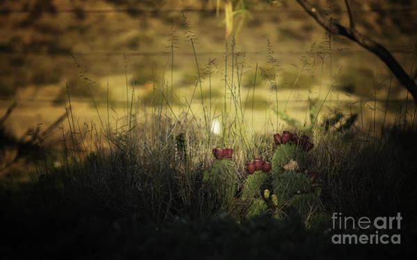 Photograph - Sunset Cactus by Susan Warren