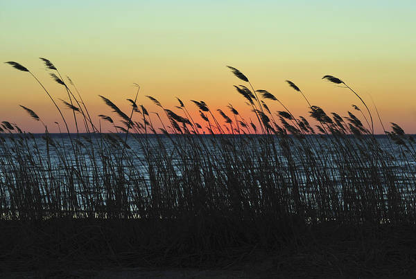 Photograph - Sunset Colors Island Beach State Park Nj by Terry DeLuco