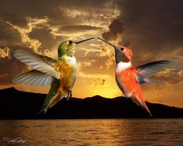 Rufous Photograph - Sunset Courtship by David Salter