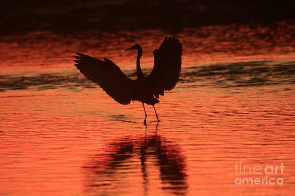 Photograph - Sunset Dancer by John F Tsumas